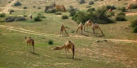 UAE_Ras Al-Khaimah_IrenicRhonda