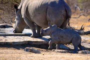 sudafrica_rinoceronti_Arno Meintjes