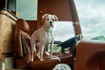 cane in autobus_Millennium Luxury Coaches