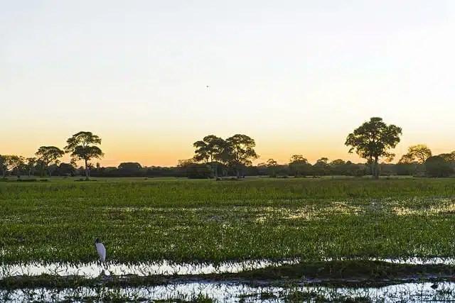 Pantanal - Brasile