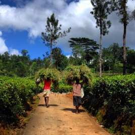 Hill Valley - Sri Lanka