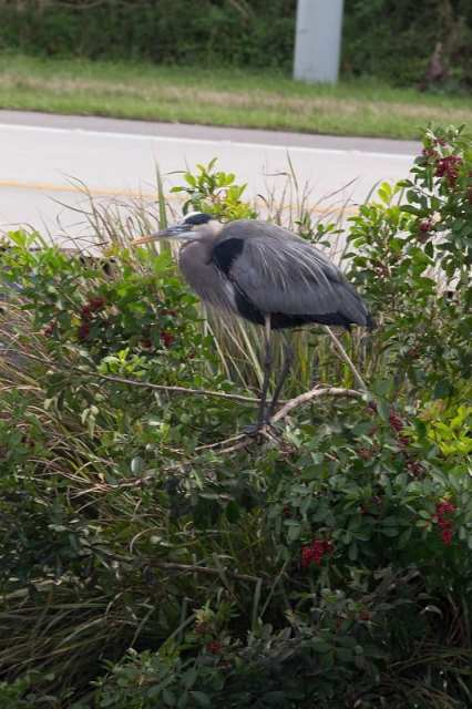 Everglades - Florida, USA