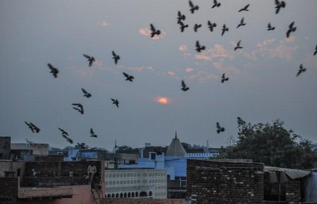 Agra photo inde