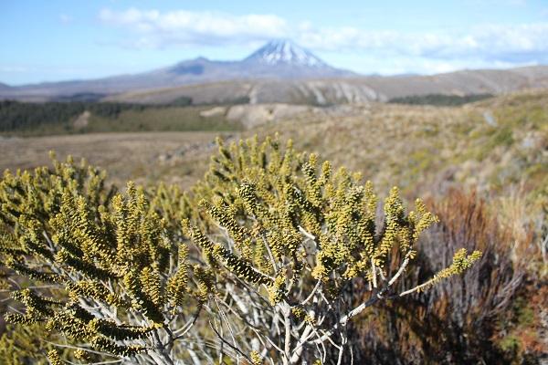 photo parc national tongariro nouvelle zélande 3