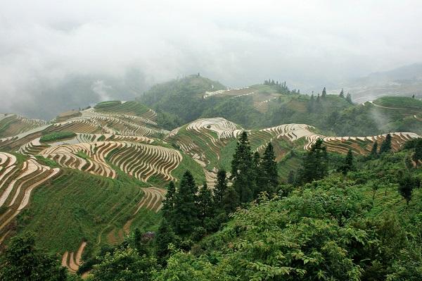 Que voir en Chine - rizières longsheng