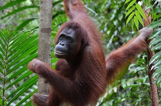 20 choses à faire et voir absolument en Malaisie