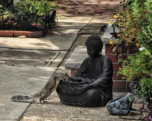 Buddha Squirrel