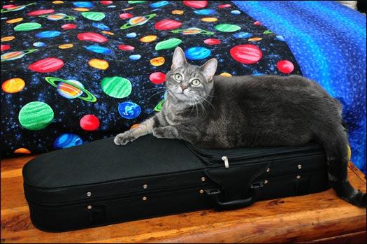 Nora On Ukulele Case