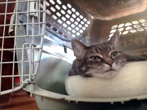 Nora The Piano Cat In Cat Carrier