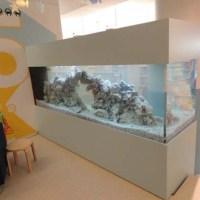 500 freshwater aquarium fish pdf - 500 freshwater aquarium fish pdf