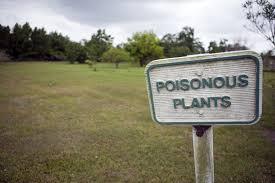 pois plant