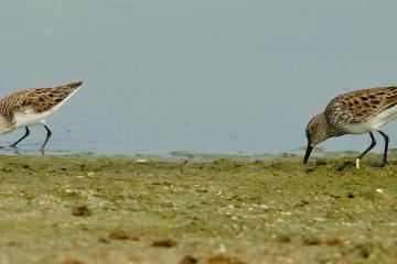 coastal bird watching