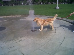 Fido Cooling Off at Columbus Park by Anonymous - July 2012