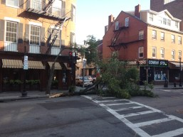 Tree Down at Hanover & Parmenter Streets Intersection (Photo by Matt Black)