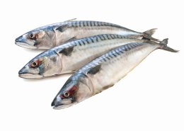 Mackerel-rs