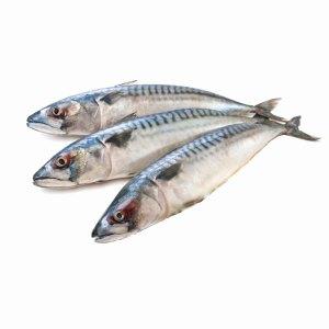 Mackerel-rs