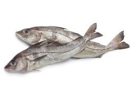 haddock-rs