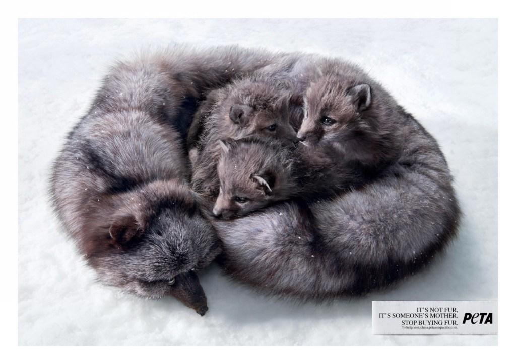 PETA - Mother Fox