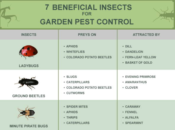 """Beneficial"" Insects act as Alternative to Harmful & Toxic Pesticides"