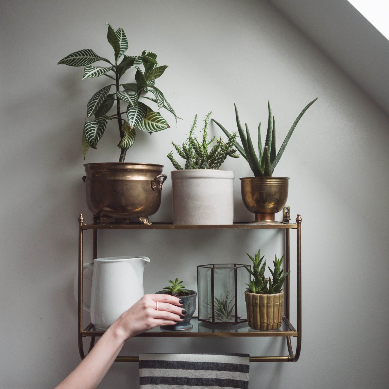 Plant Shelving Indoor 25 Indoor Garden Ideas Your No 1 Source Of Architecture