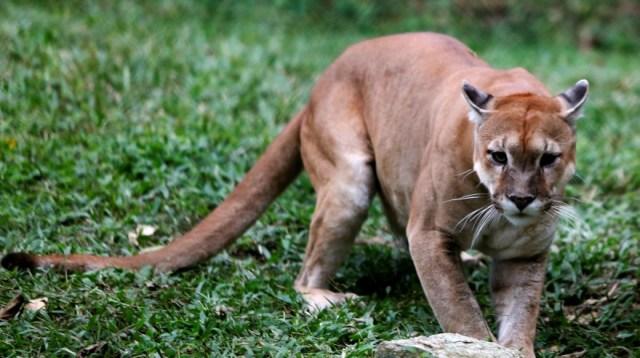 Animales del zoológico de venezuela