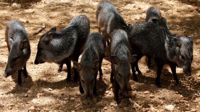 Animales duran más de 15 días sin comer en zoológico
