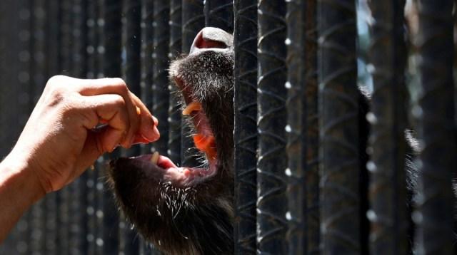 No hay alimentos en zoológico de venezuela