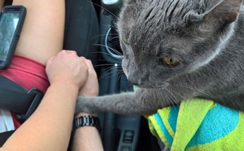 Conmovedora imagen de un gato que sostiene la mano de sus humanos en su último viaje al veterinario