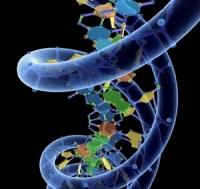 Estudo científico aponta que é impossível determinar a homossexualidade através do DNA