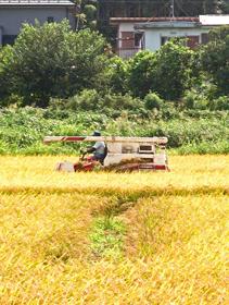 農業法人・農業生産法人設立サポートのご案内