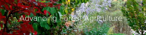 forest agriculture and growing food