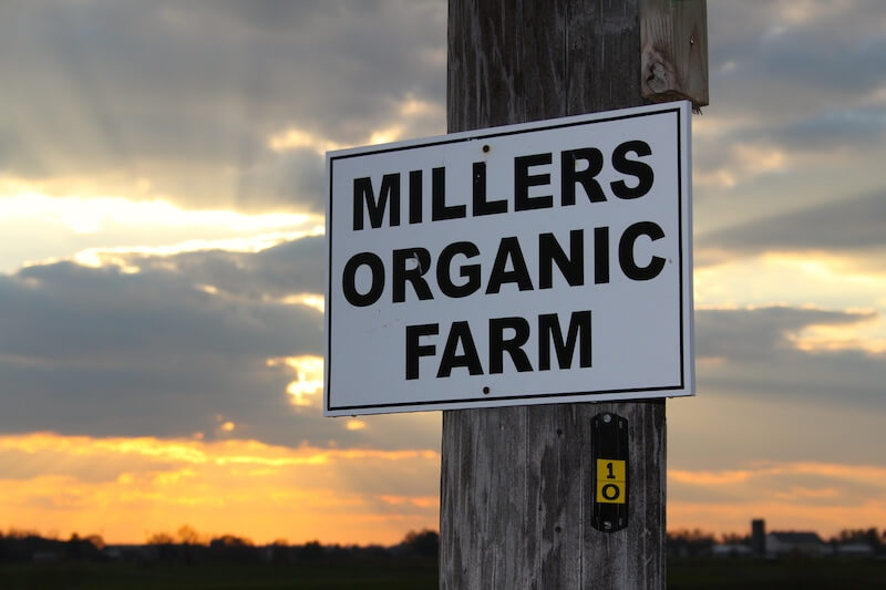 Miller's Organic Farm–Gifts of Spring