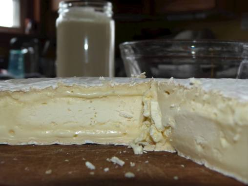 Glencolton Farms Fresh brie