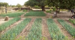 L'Agriculture, levier performant du Plan Sénégal Emergent (4)