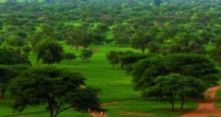 «La grande muraille verte», un projet panafricain trop ambitieux ?