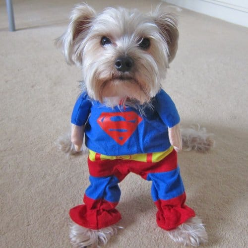 Alfie Pet Superhero Superman Costume