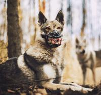 Reedog Werewolf Dog Muzzle - NoveltyStreet