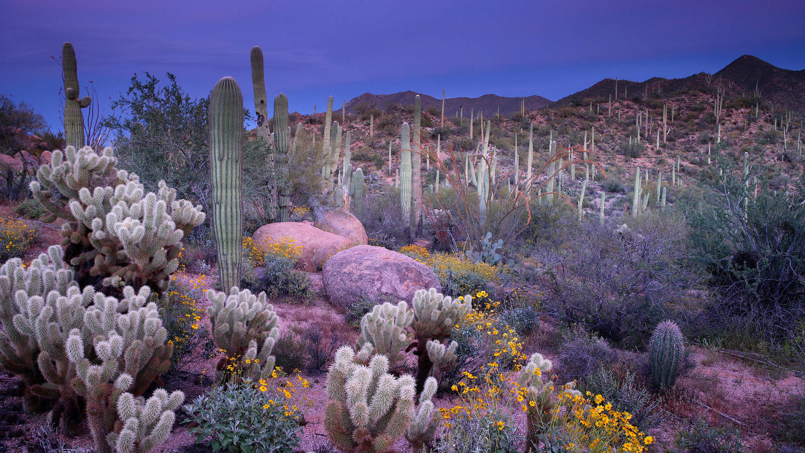 Free Fall Season Wallpaper Saguaro 183 National Parks Conservation Association