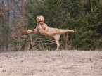 Bolshoi Ballet tryouts