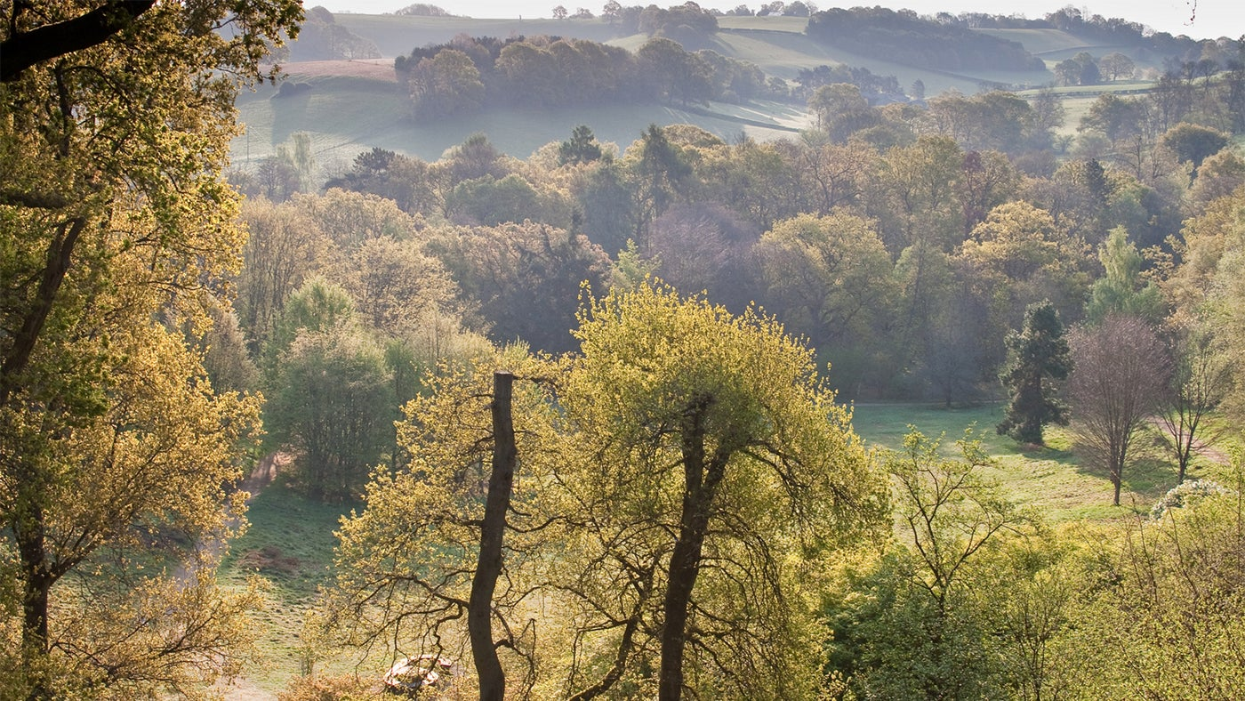 The Wilfrid Boutique Farmhouse Dr Fox 39s Vision For Winkworth Arboretum National Trust