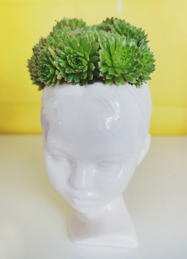 Nubby Twiglet   Succulents Paired With Unique Planters class=