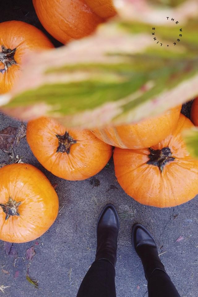 Nubby Twiglet   The Week + Links