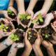 Medio Ambiente informa sembró más de un millón árboles en RD
