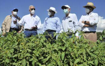 Ministro de Agricultura anuncia auxilio a los productores de tomate del país
