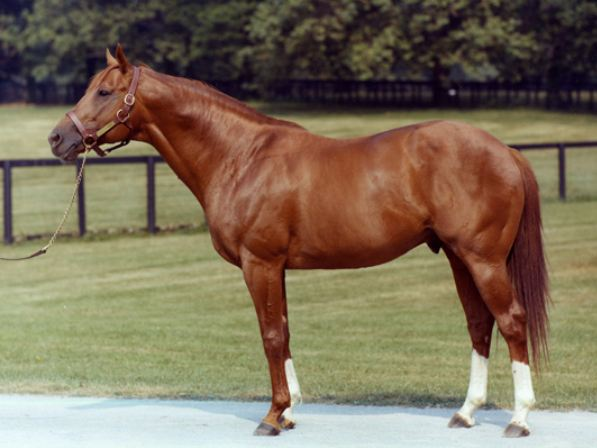 Secretariat via Wikipedia