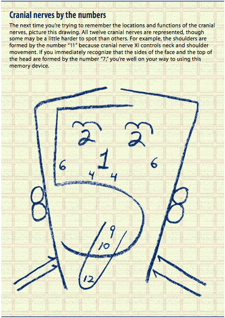 40 Tips and Mnemonics in remembering the 12 Cranial Nerves - Nursing