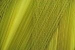 Green Threads by Beth Altman Copyright © 2013