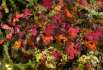 Mosaic Garden by Toni Zappone Copyright © 2013