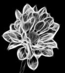 Smoky Flower by Robert Fehnel Copyright © 2013