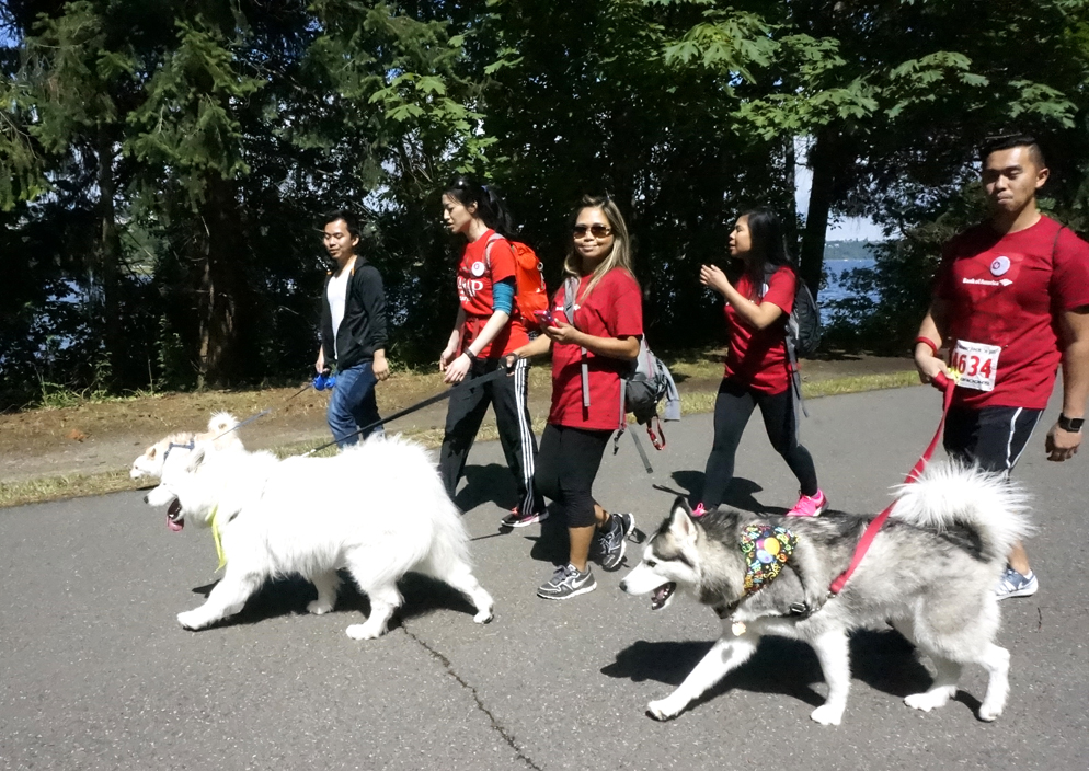 Participants enjoy a sunny walk with their dogs. (Photo by George Liu/NWAW)